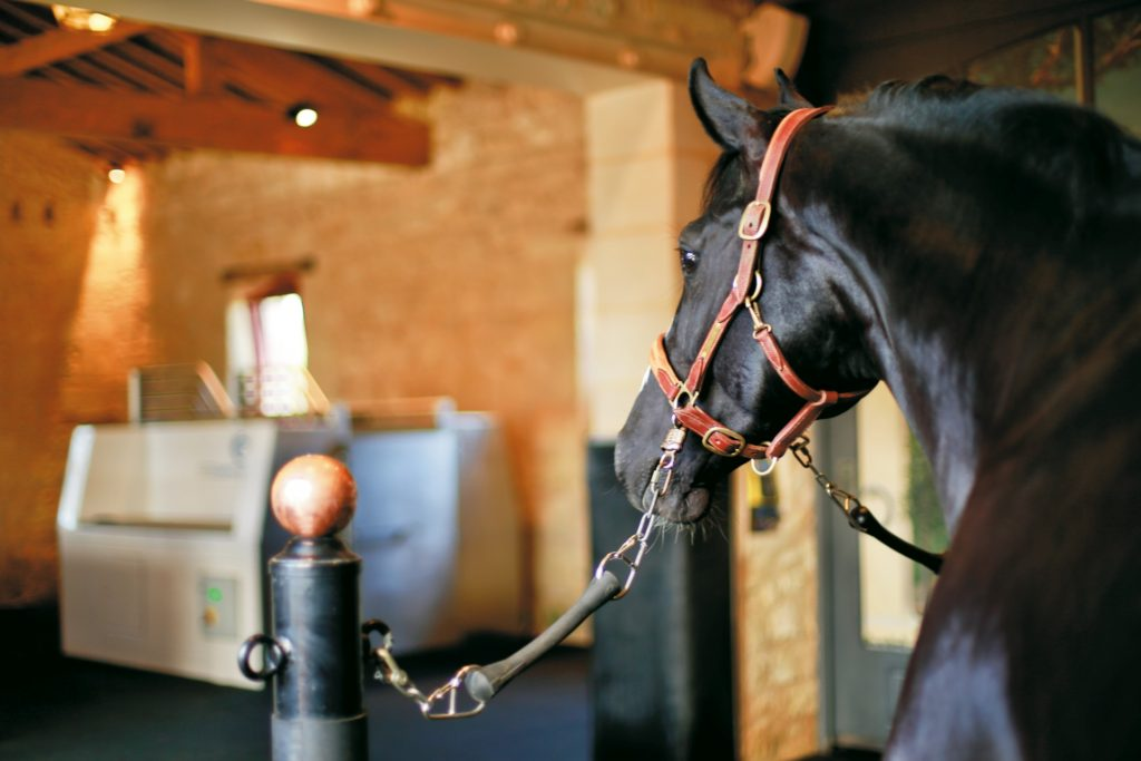 CET Equine Spa at Chateau Malleret, France