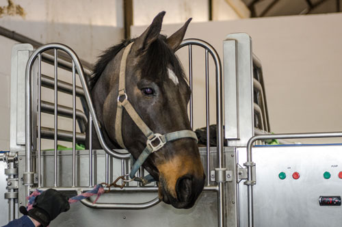 Horse in CET Equine Spa