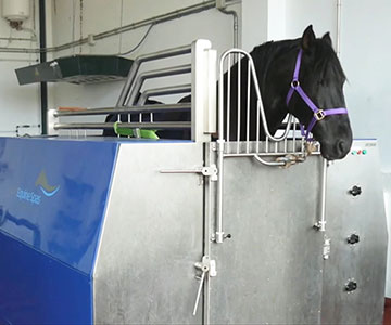 Dressage horse in CET Equine Spa at Sandaraca Ymas, Spain